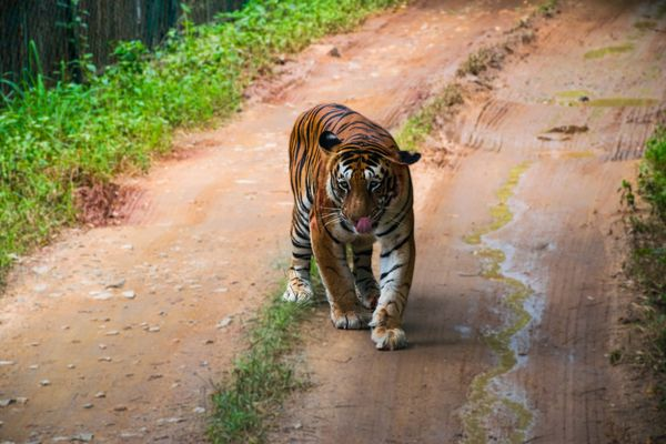 Trip to wild – Bannerghatta National Park